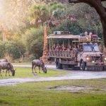 Conheça as belezas da África no Animal Kingdom 20