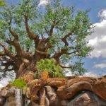 5 Curiosidades sobre o Animal Kingdom! 8