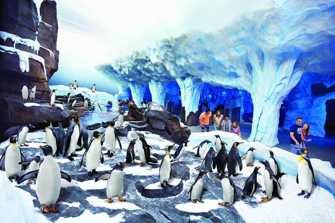 Conheça pinguins super fofos no Sea of World do Sea World 22