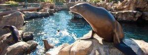 Sea of Delight uma área dedicada aos leões marinhos no Sea World 20