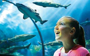 Conheça as atrações do Sea of Mistery no Sea World 14