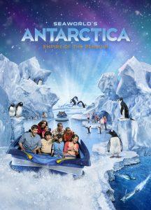 Conheça pinguins super fofos no Sea of World do Sea World 24