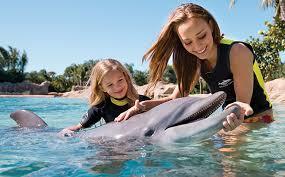 Encontre Golfinhos e Raias no Sea of Shallows no Sea World 28