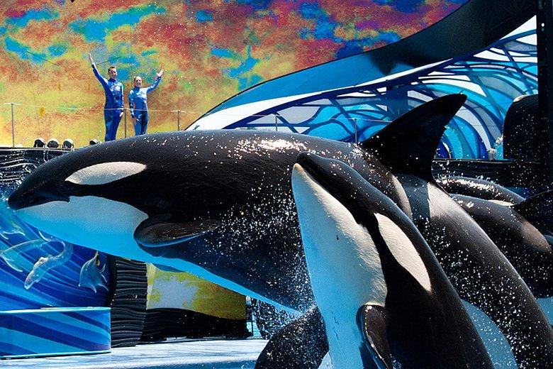 Conheças animais dos cantos mais frios do planeta no Sea of Power do Sea World 8