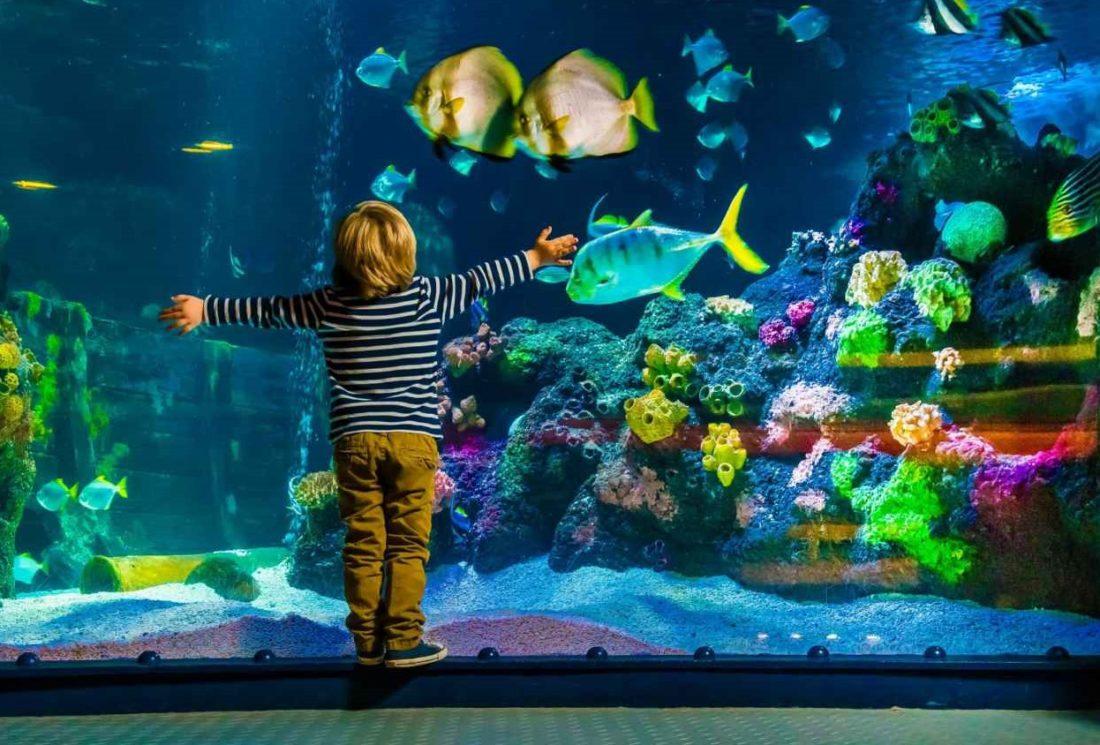 Conheço o belíssimo aquário SEA LIFE em Orlando 2
