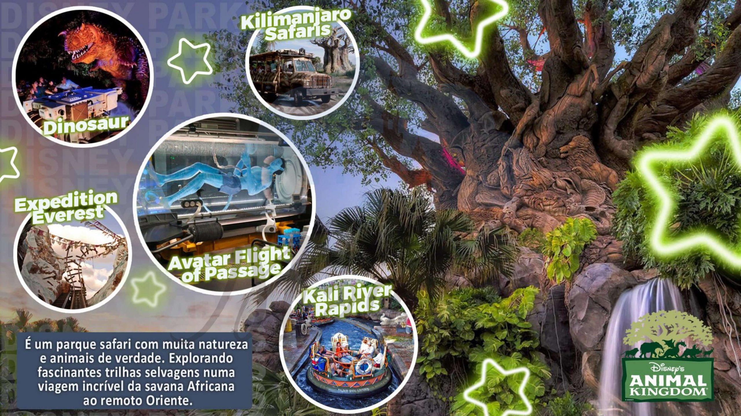 Grupo Sonho de Princesa - Disney Orlando Julho 2022 22